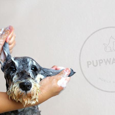 Pupwash911 Brand Identity