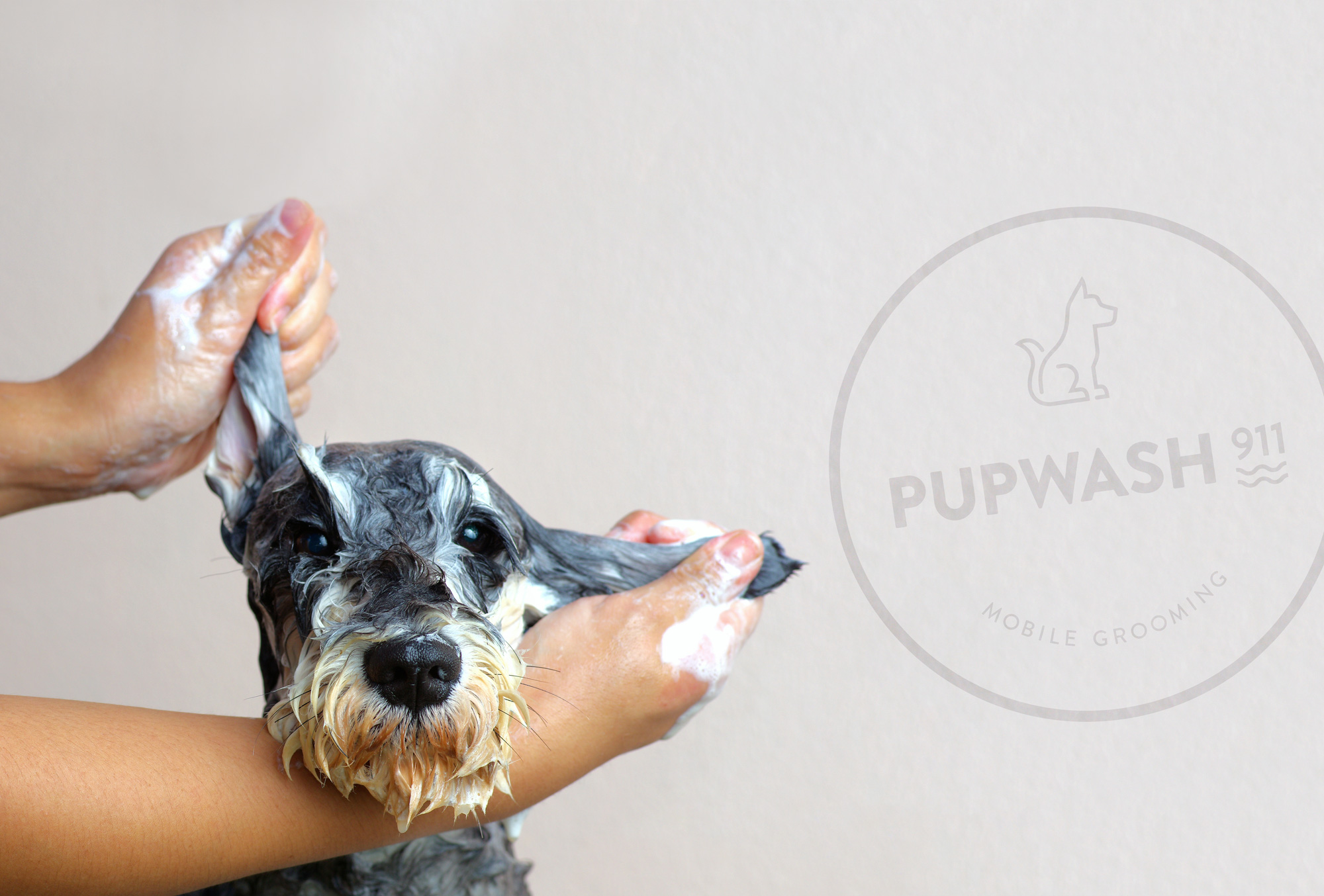 Pupwash911 Brand Identity by Joy Tsai - Creative Work